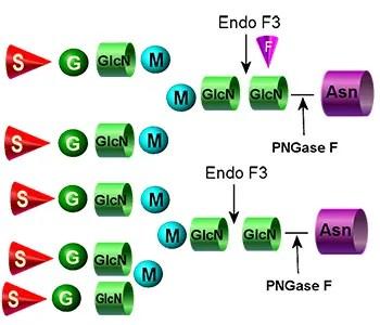 Endo F3 image