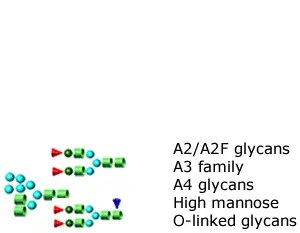 Glycan Standards