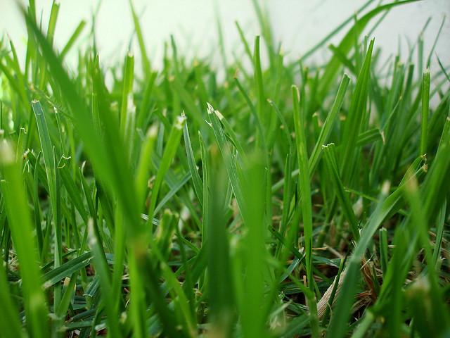 Model GROW – 4 kroki do wzrostu