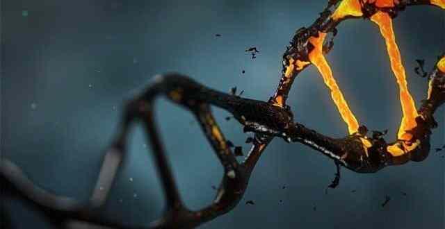 أشهر خرافات الجينات والصفات الوراثية