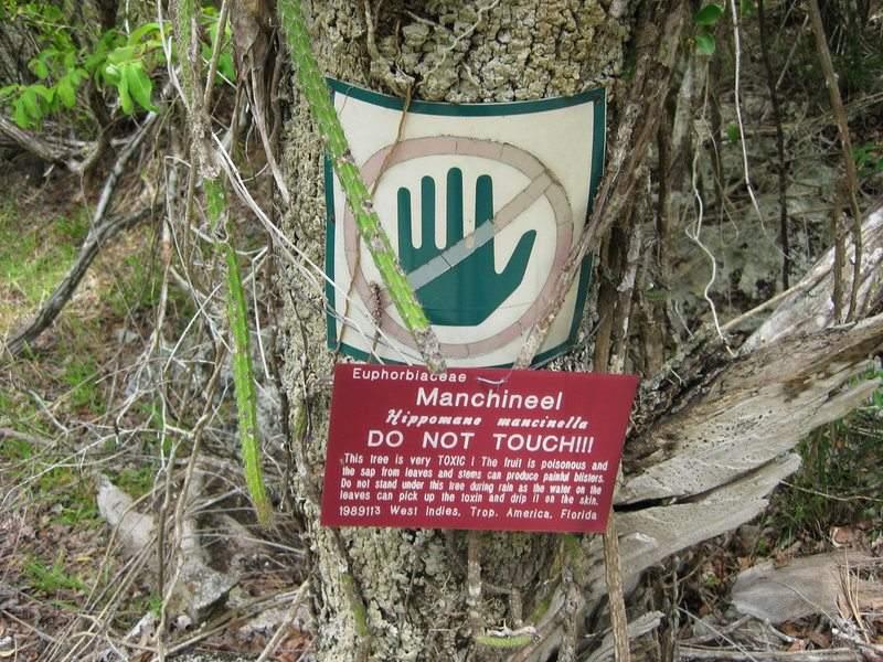 طولها يصل إلى 15 مترا.. ما هي أخطر شجرة على وجه الأرض؟
