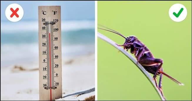 الصراصير لقياس الحرارة.. أغرب الحيل العملية الفعالة