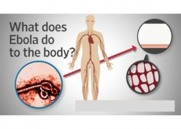 What does a disease do to the body?