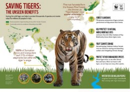 How effective is the WWF at saving animals and Wildlife?