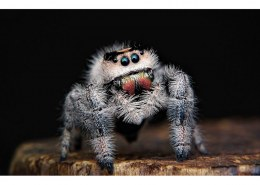 Can a spider get in your brain?