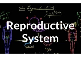 What happens in reproduction?