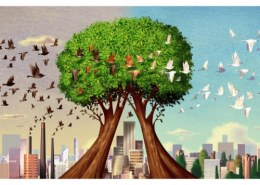 How do trees clean the atmosphere?