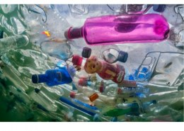 What are the most effective ways to tackle plastic pollution in your school?