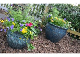 Mention 3 fun container Garden Projects kids will love?