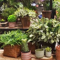 Categoria Plantas