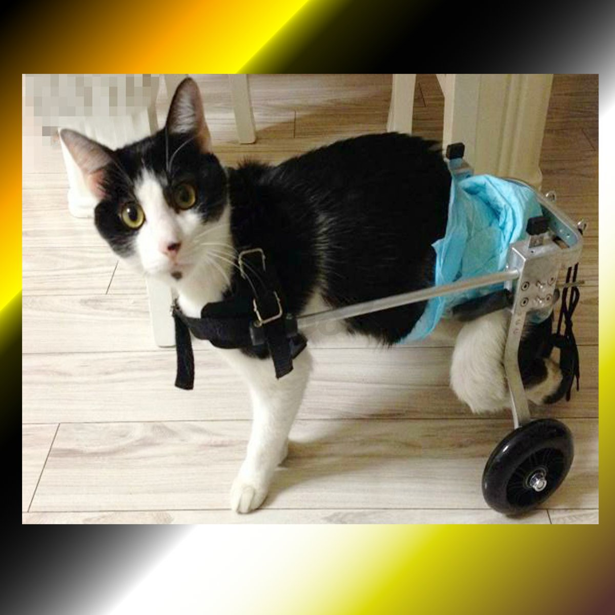 wheelchair for cats dining room chair covers big w 2 wheel adjustable pet dog cat walk