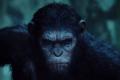 Primer spot de TV para Dawn of the Planet of the Apes