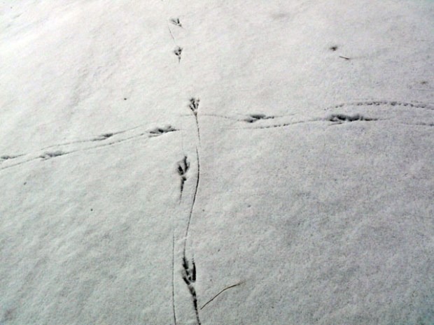Huangdao Snowprints Qingdao Snow