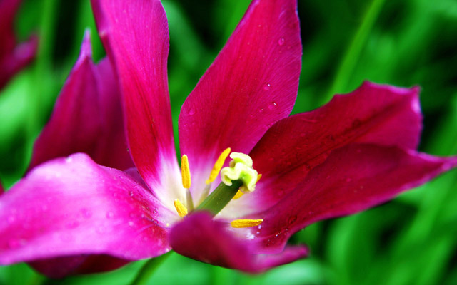 Qingdao Flowers