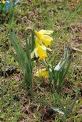 2015-04-29-Les_Moussieres-Bellecombe-Photos_Papa-IMG_4955