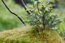 2015-05-26-Qispi-Jura_Leman-Dent_Vaulion-Vallorbe-IMG_9024