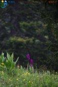 2015-05-26-Qispi-Jura_Leman-Dent_Vaulion-Vallorbe-IMG_9032