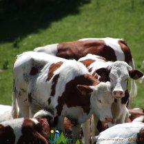 2015-05-28-Qispi-Jura_Leman-Hautes_Combes-IMG_9294