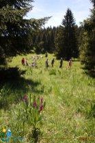 2015-05-28-Qispi-Jura_Leman-Hautes_Combes-IMG_9296