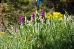 2015-05-28-Qispi-Jura_Leman-Hautes_Combes-IMG_9297