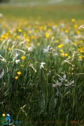 2015-05-28-Qispi-Jura_Leman-Hautes_Combes-IMG_9314