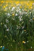 2015-05-28-Qispi-Jura_Leman-Hautes_Combes-IMG_9316
