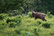 2015-05-30-Qispi-Jura_Leman-Colomby-IMG_9552