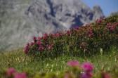 Rhododendrons – Jour 2 – Tour du Marguareis – Juin 2016 – Trek, Rando, Italie