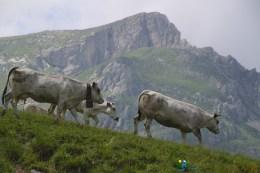 Troupeau – Jour 2 – Tour du Marguareis – Juin 2016 – Trek, Rando, Italie