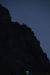 Chamois en ombre chinoise – Jour 5 – Tour du Marguareis – Juin 2016 – Trek, Rando, Italie