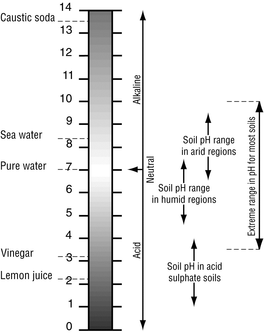 medium resolution of what is ph