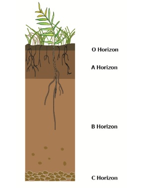 horizon diagram soil formation 1989 honda civic distributor wiring how soils form environment land and water queensland government profile showing the different layers or horizons
