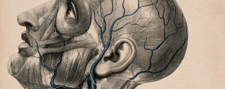 alzheimer Los vasos linfaticos