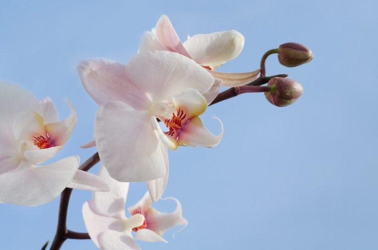 orquídea plantas