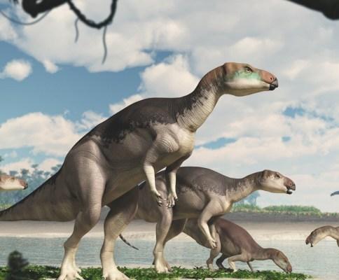 Fostoria dinosaur Lightning Ridge