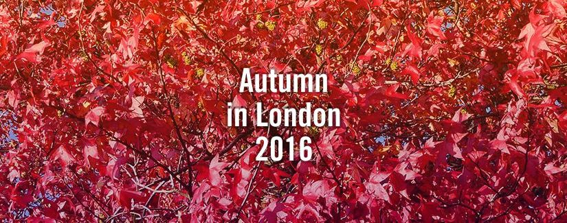 Autumn SED Events & Arts Preview 2016
