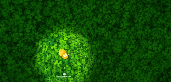 Qoobee Hiding Among Green Leaves Wallpaper