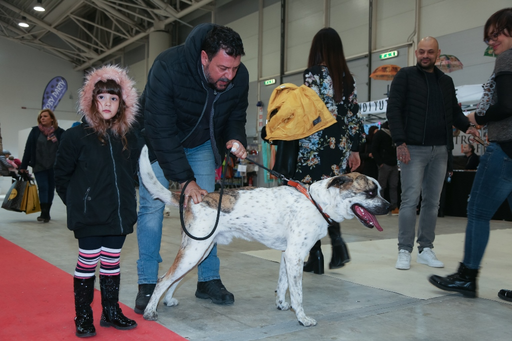 Four Paws at the Rome Exhibition 2018