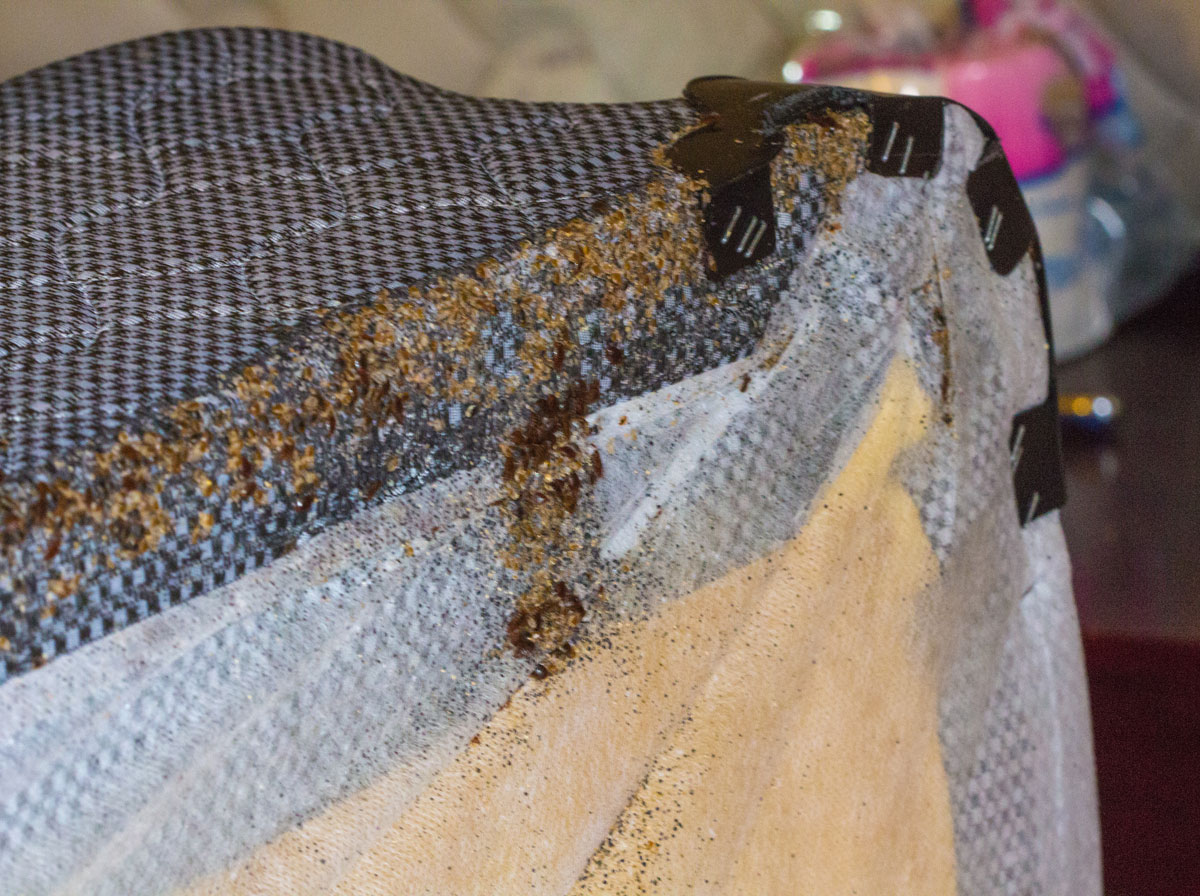 Real Life Bed Bugs Infestations Pictures 2 Pest Control
