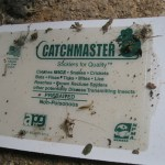 Raleigh Home Inspection On Pests