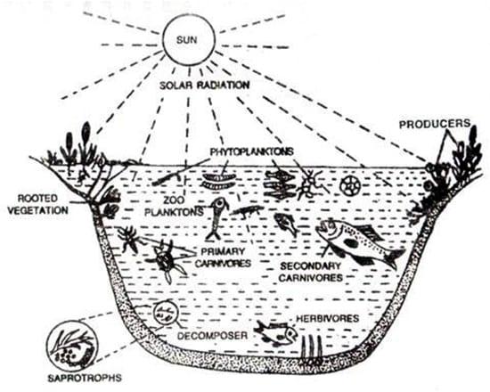 water ecosystem diagram 2003 honda odyssey parts pond - qs study