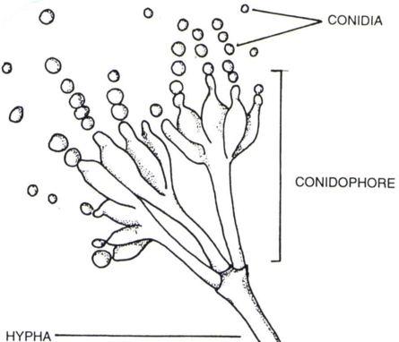Httpswiring Diagram Herokuapp Compostmoss Traits 2019 05 11t06