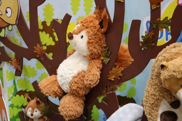 NICI-Waldtiere-Eichhörnchen