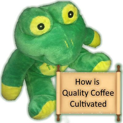 How is Quality Coffee Produced – Part 1: Cultivation