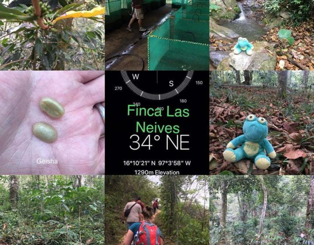Finca Las Neives Visit
