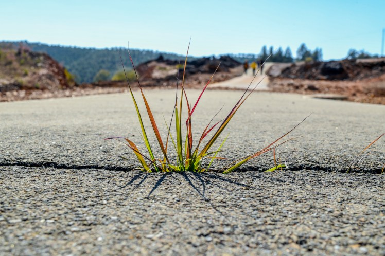 Grass growing through a crack in the paved road