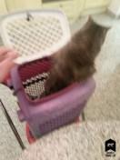 chat-Tentative d'échappatoire de la cage