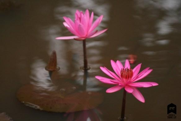 penis-floral-emergent