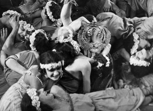 Ce que Tigre attend d'un gala de blogueurs