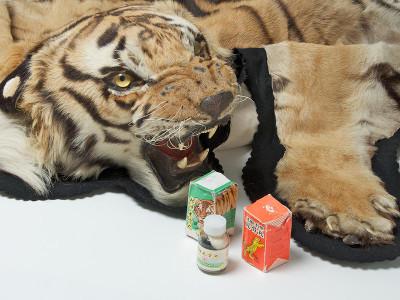 la gueulante du tigre lettre un ami des tigres quand le tigre lit. Black Bedroom Furniture Sets. Home Design Ideas